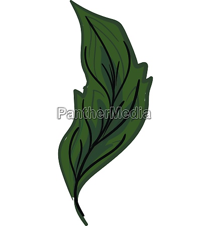 green feather with vane vector or