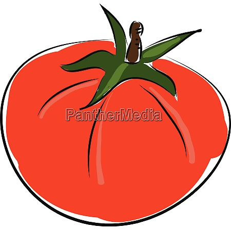 cartoon red tomato vector illustration on
