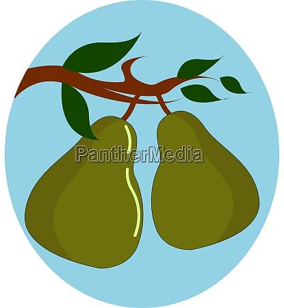 green pear illustration vector on white