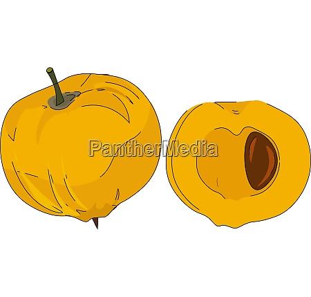 cartoon yellow egg fruit vector or