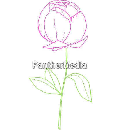 drawing of a purple colored rose