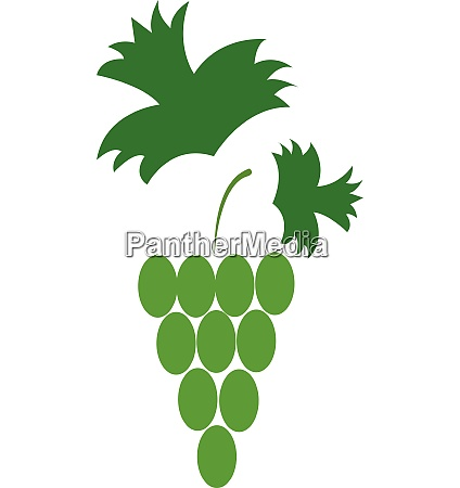 green grapes vector or color illustration
