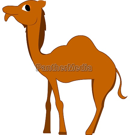 a camel with big eyes vector