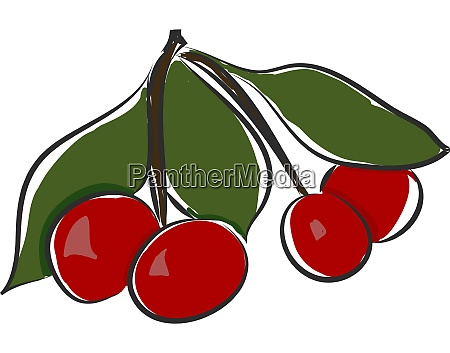 a bunch of cherries vector or
