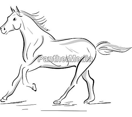 eine laufende pferdesilhouette vektor oder farbillustration