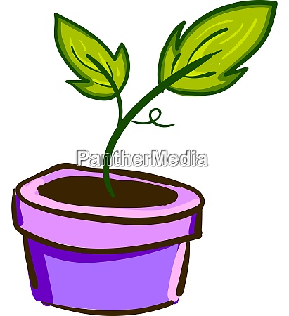 a plant with leaves in a