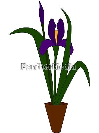 an iris plant with a purple
