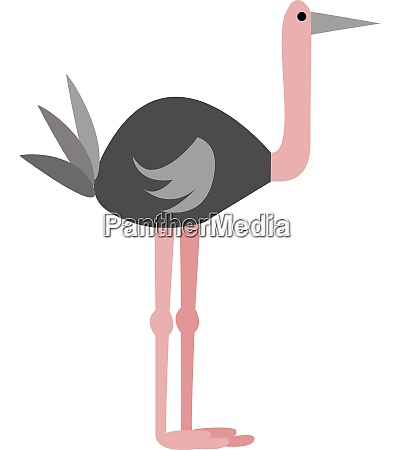 an ostrich vector or color illustration