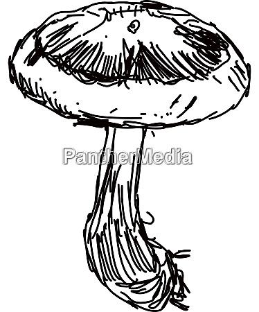 mushroom drawing illustration vector on white
