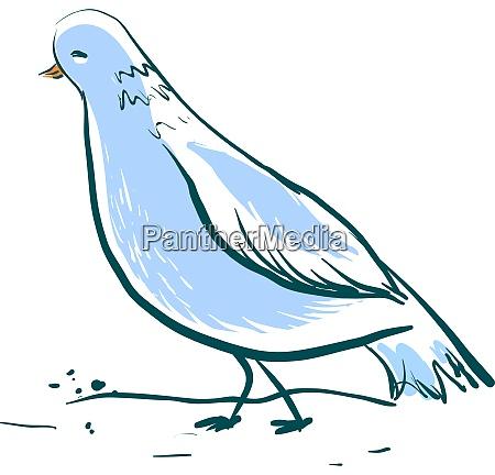 beautiful blue dove illustration vector on