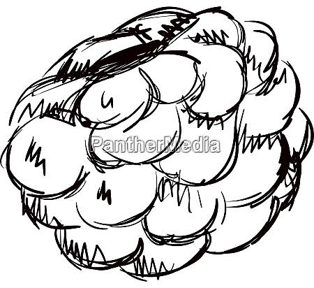 raspberry drawing illustration vector on white