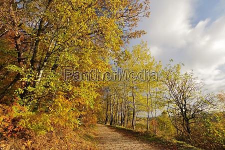 goldener herbst im naturreservat senne oerlinghausen