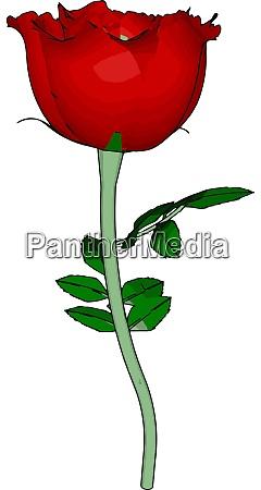 red rose illustration vector on white