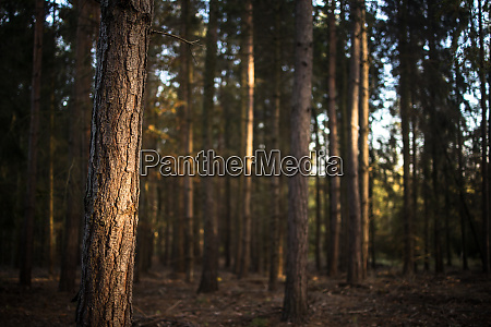lovely late summer forest landscape with