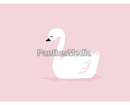 white swan illustration vector on white