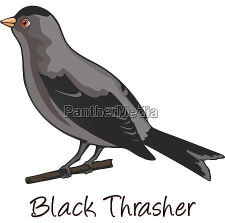 brown trasher color illustration