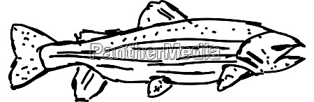 fish drawing illustration vector on white
