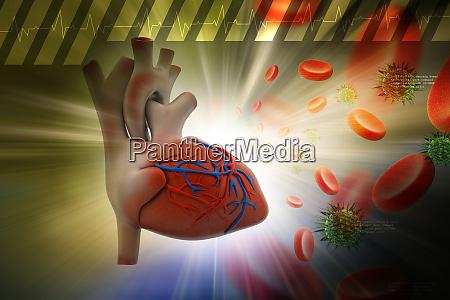menschliches herz mit thrombozyten und virus