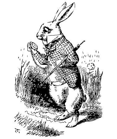 weisses kaninchen mit uhr