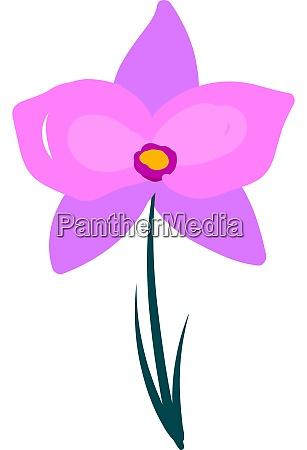 orchid flower illustration vector on white