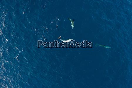 luftaufnahme von zwei delfinen die an