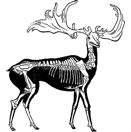 skelett und wahrscheinliche form von riesigen