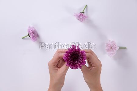 woman holding a little purple flower