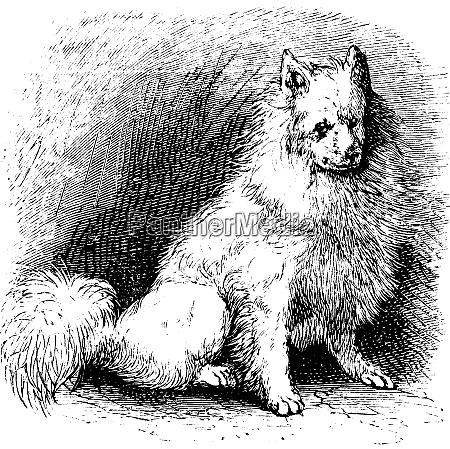 husky vintage gravur