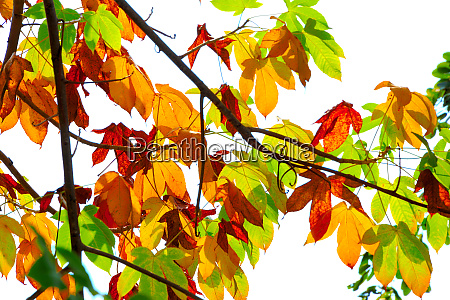 close up group of autumn falling