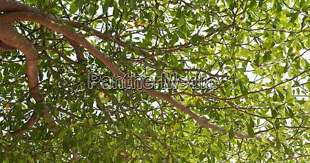 sunlight under the green plant tree
