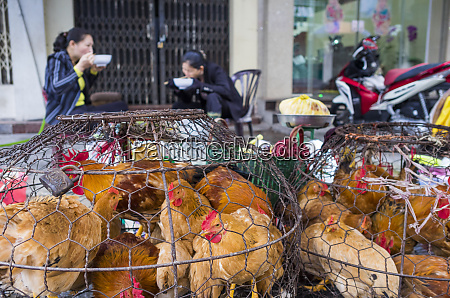 vietnam haiphong market chickens for sale
