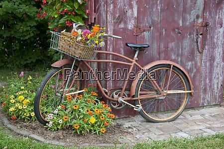 altes fahrrad mit blumenkorb neben altem