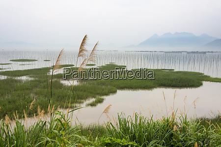 bamboo poles of seaweed farm along