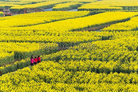 tourists on thousand islet canola flower