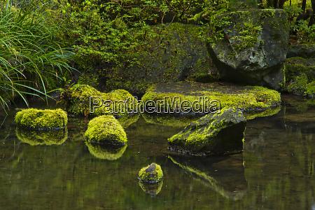 moss covered rocks reflection natural garden