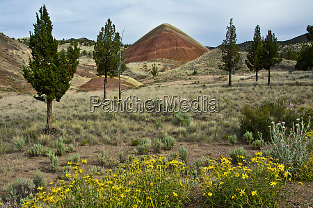 red hill painted hills mitchell oregon