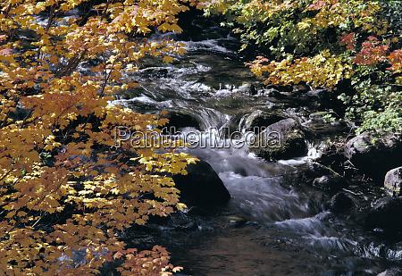 usa oregon north santiam river the