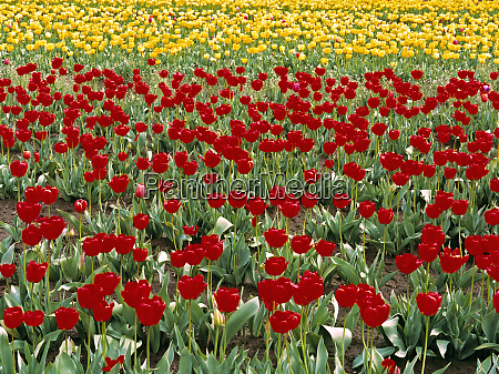 usa oregon willamette valley colorful red
