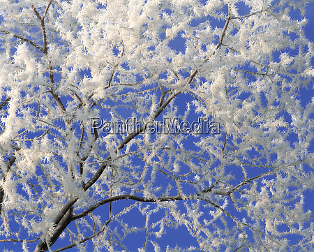 usa oregon bend hoar frost accentuates