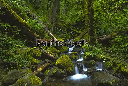 temperate rainforest stream in columbia river