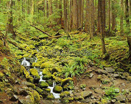 wa olympic national park stream with