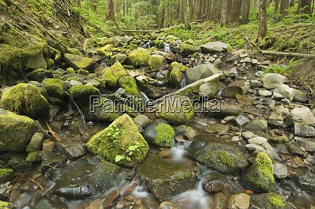 usa wa olympic np mountain stream