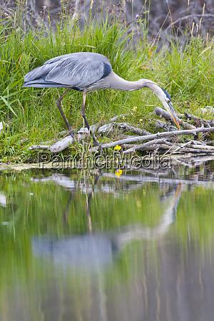 wyoming grand teton national park great