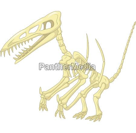 pteronodon skelett