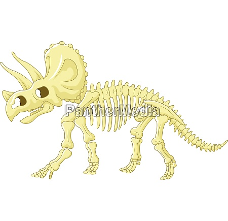 triceratops skelett