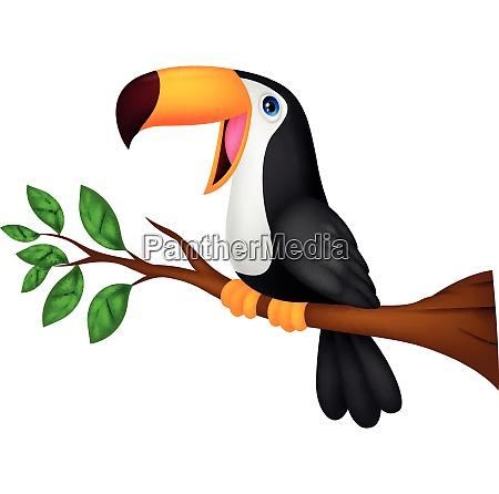 lustige toucan vogel cartoon