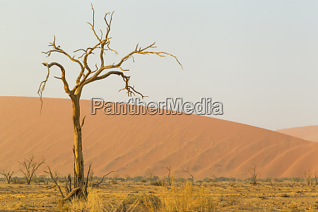 afrika namibia namib wueste namib naukluft