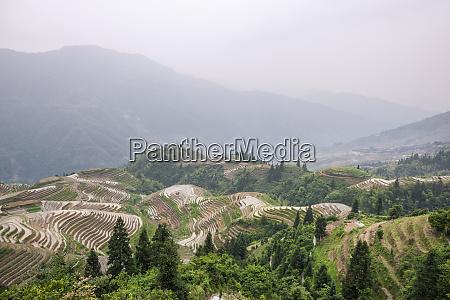 dragon spine rice terraces longsheng china