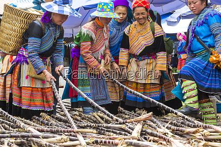 blume hmong stamm frauen kaufen zuckerrohr
