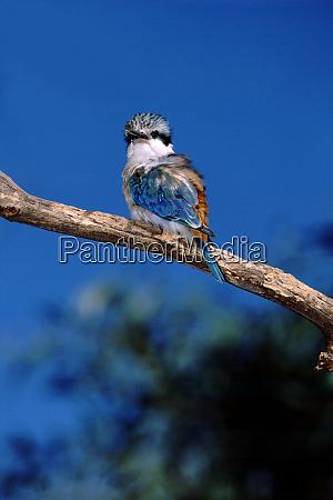 australia northern territory alice springs alice